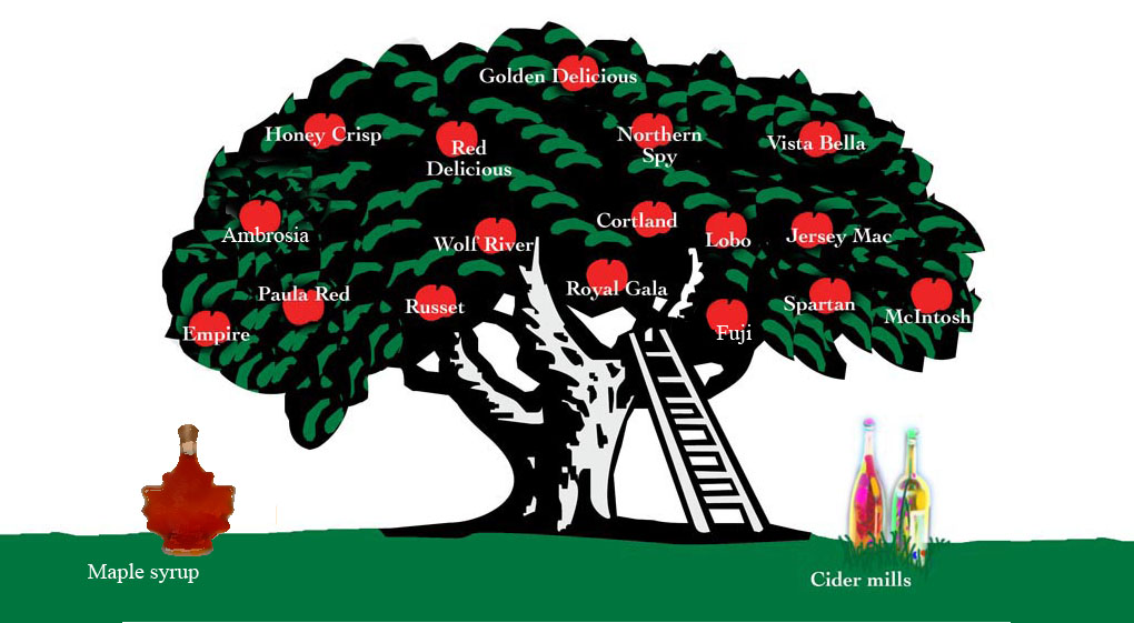 Apple varieties and maple syrup